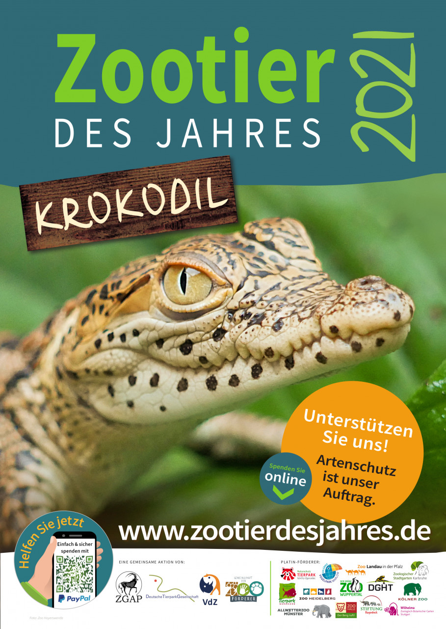 Krokodil - das Zootier des Jahres 2021